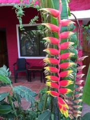 Baratillo, Costa Rica